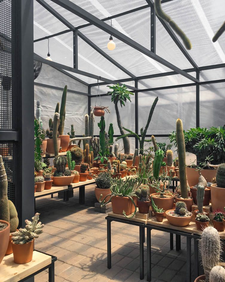 Cactus Store Pop-Up New York