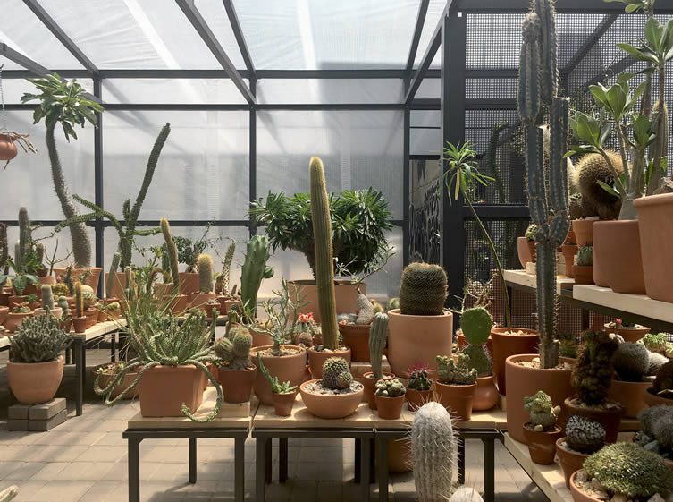 Cactus Store Pop-Up Shop New York by Carlos Morera, and Jeff Kaplon
