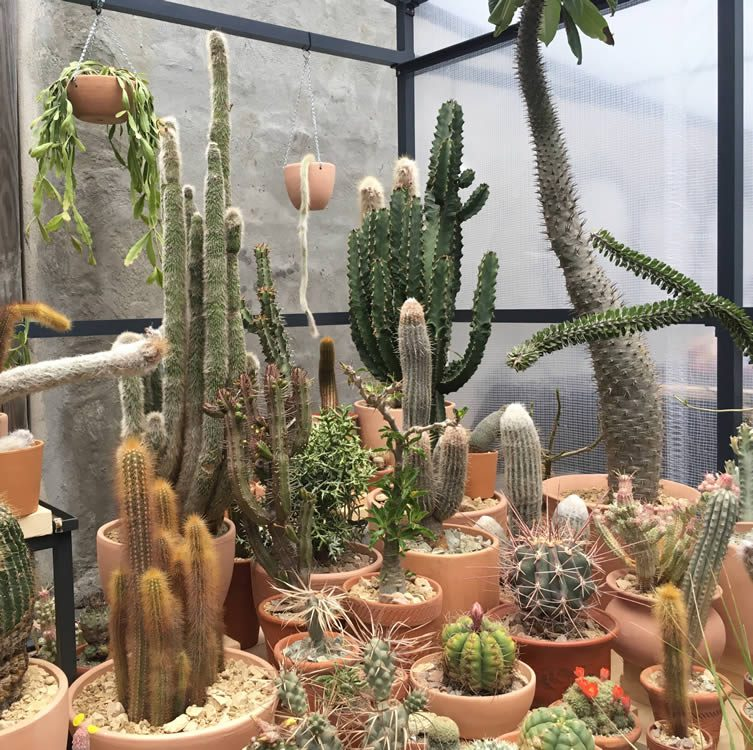 Cactus Store New York Pop-Up Shop