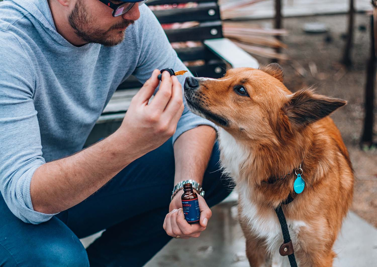 Does CBD Really Help Dogs and Cats? Pet Owners Using CBD