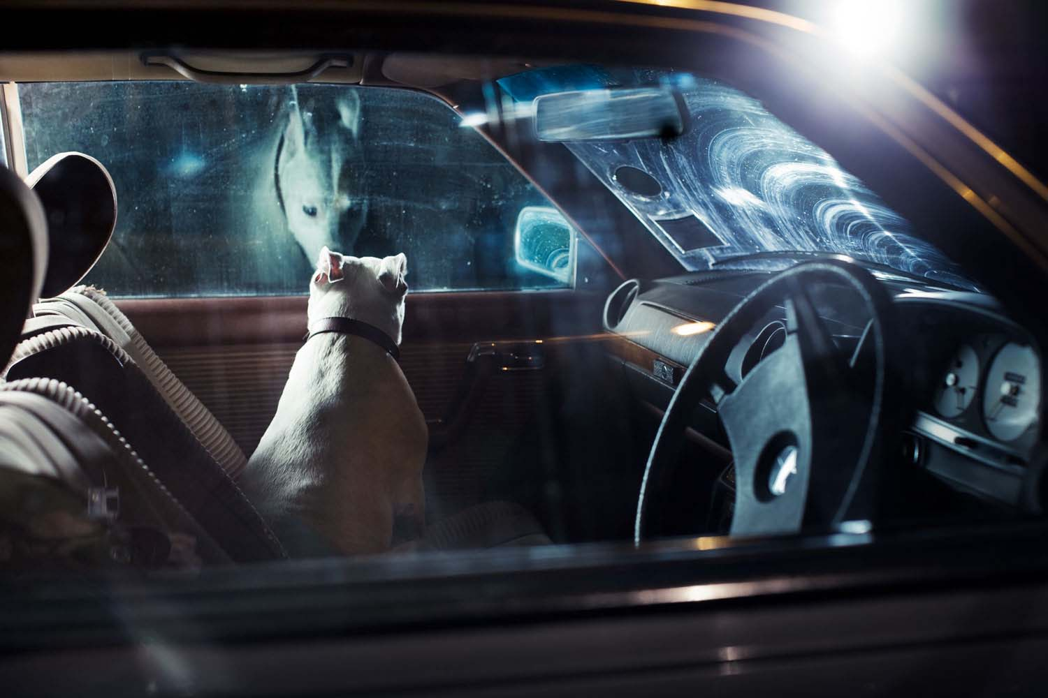 Martin Usborne, The Silence of Dogs in Cars Published by Hoxton Mini Press