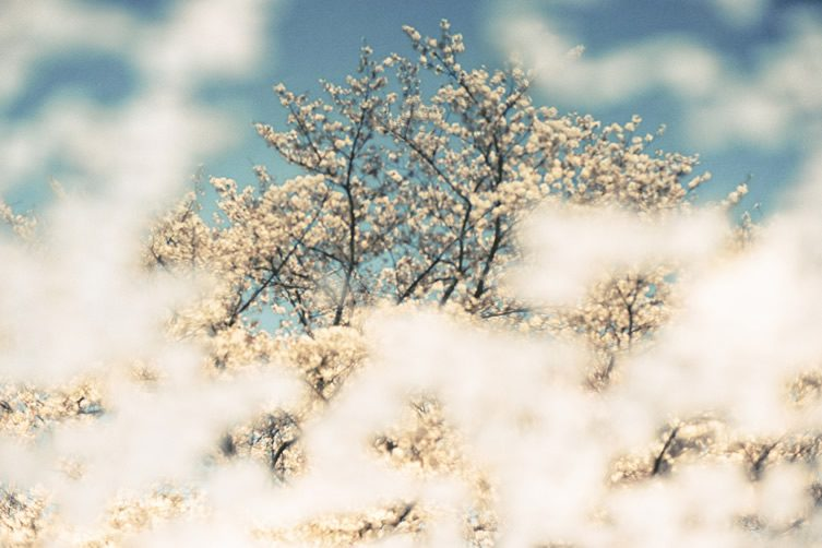 Takeshi Suga — Euphoric Serenity