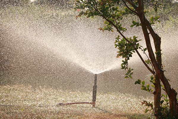 Tips to Choose a Garden Water Pump