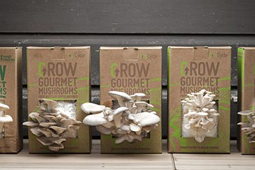 The GroCycle Project, Coffee Waste to Gourmet Mushrooms