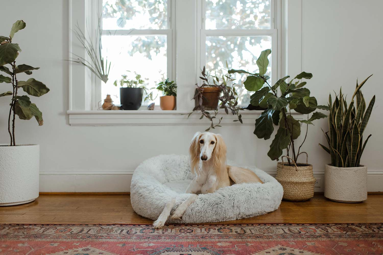 Interior Design Ideas for Your Pets