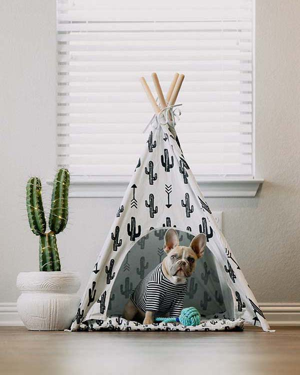 Amazing Interior Design Ideas for Your Pets' New Home