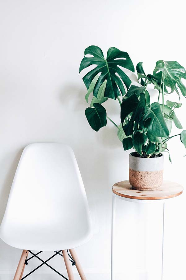 A little flora literally brings life to any space