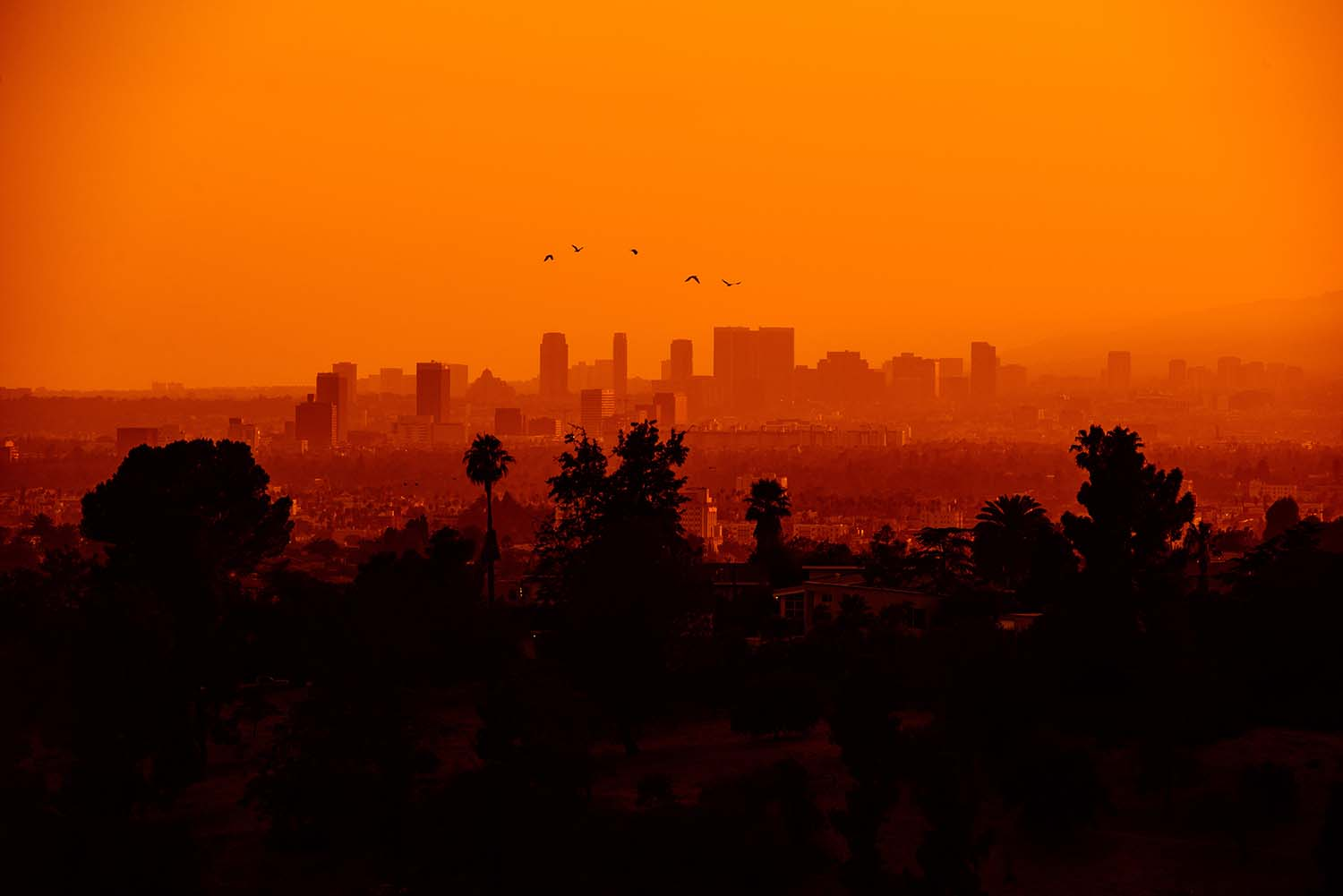 Moving To Los Angeles, a Relocation Guide