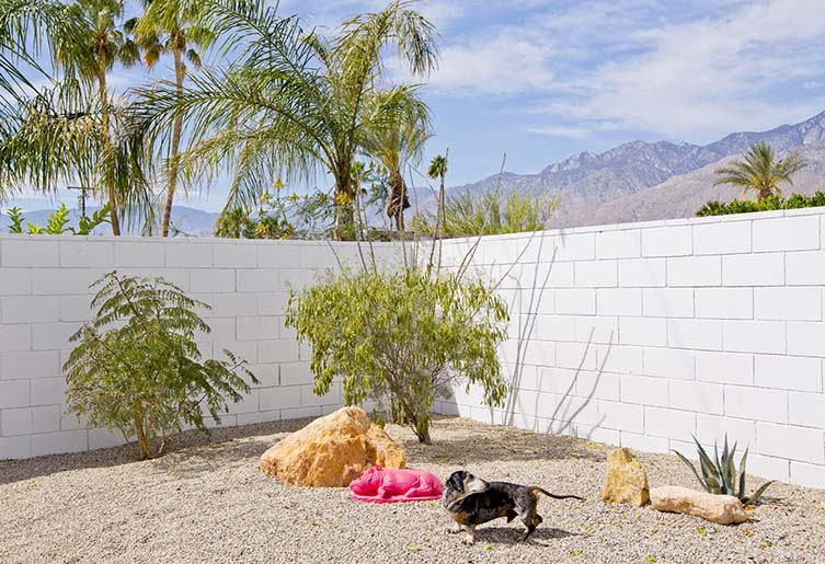 Palm Springs Dogs