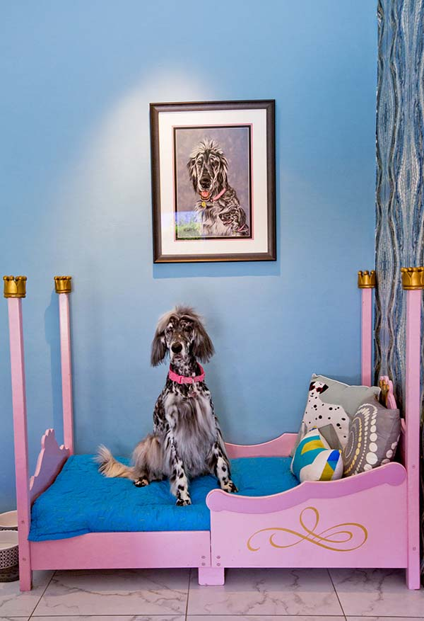 Nancy Baron, Palm Springs: Modern Dogs at Home Published by Schiffer Publishing