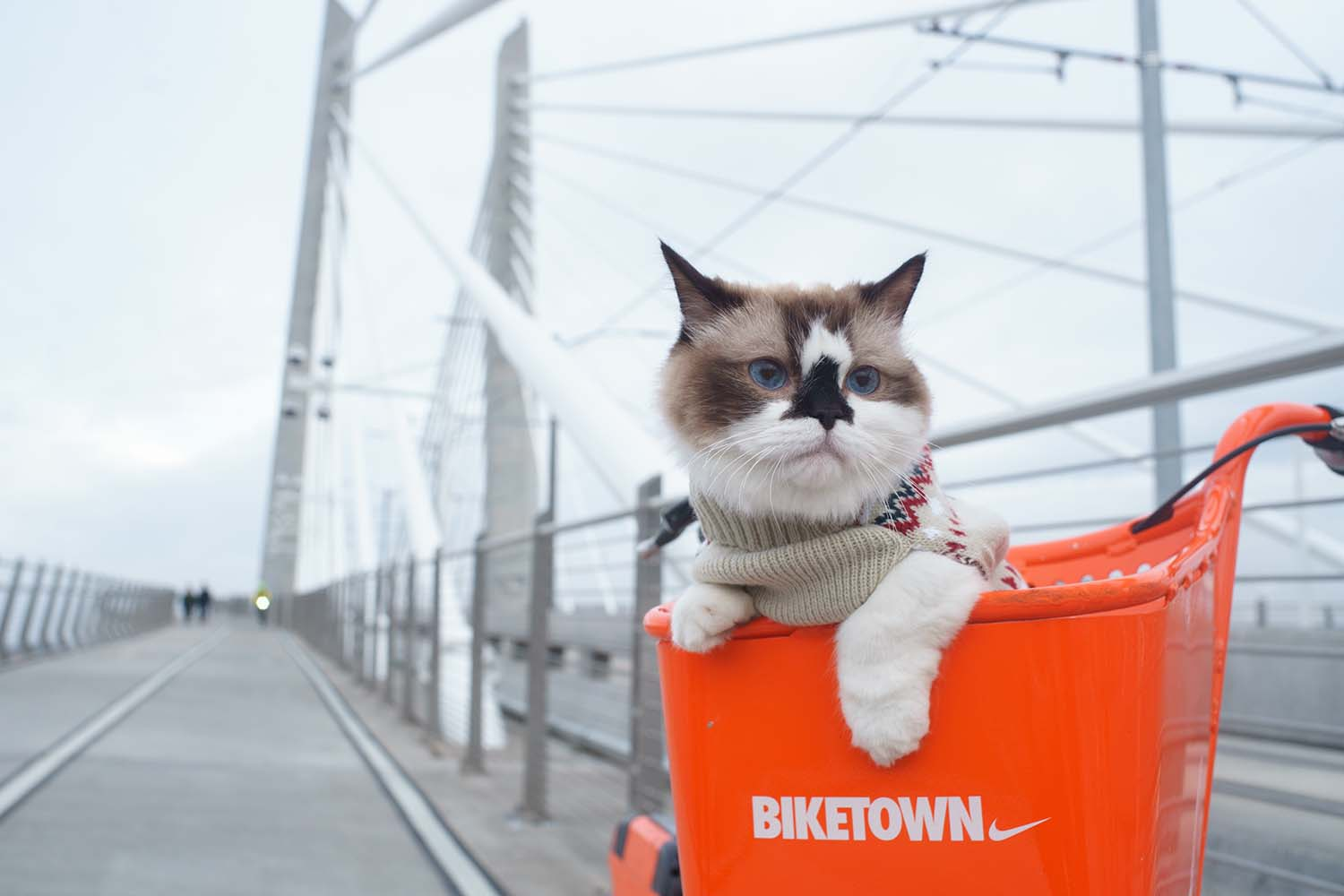 Pets in Cities: Tips for a Safe Inner-City Life With Your Furry Friend