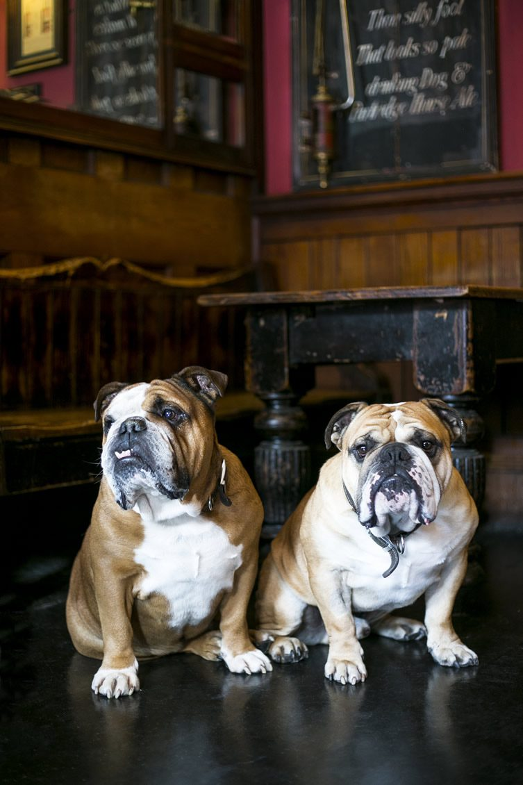 Pub Dogs of Manchester Launch Night