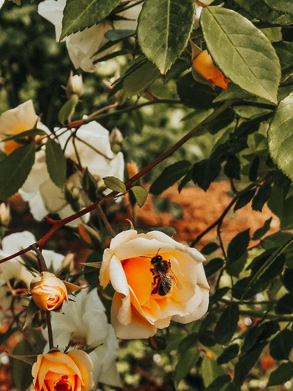 Businesses Working to Save the Bees
