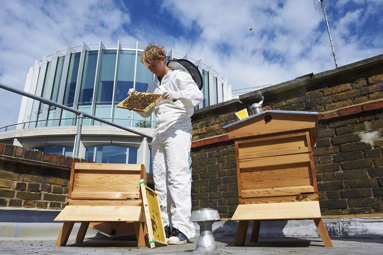 St. Ermin's Hotel, London; Urban Beekeeping
