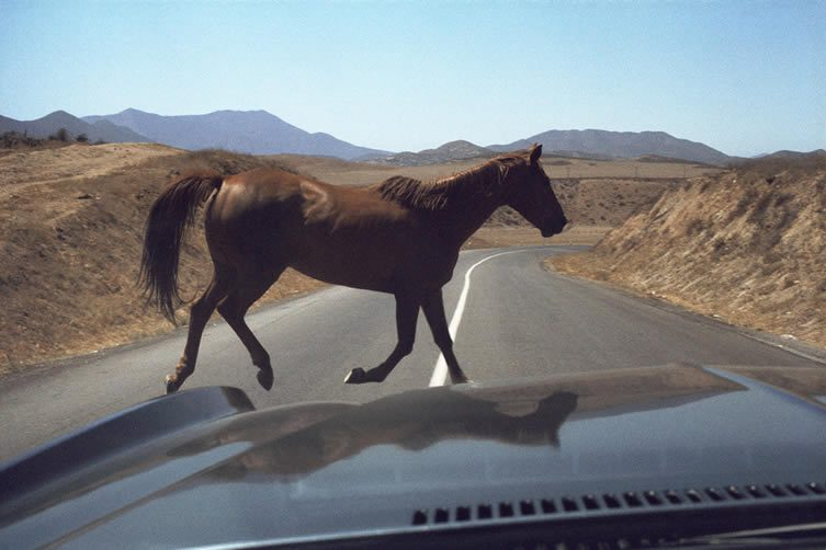 Wild Horse Encounter