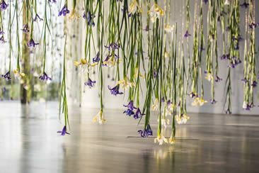 Rebecca Louise Law, The Iris