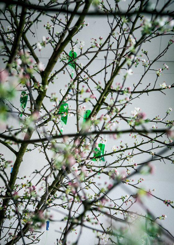 The Proposal 4; Spring Awakening