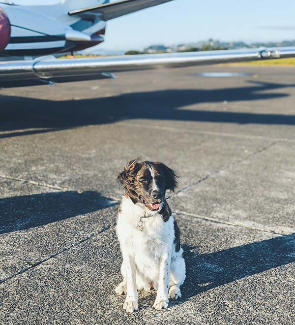 All You Need to Know About Travelling With Your Pet