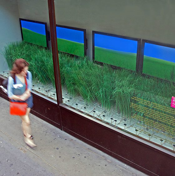 Urban Prairie; Interactive Shop Window