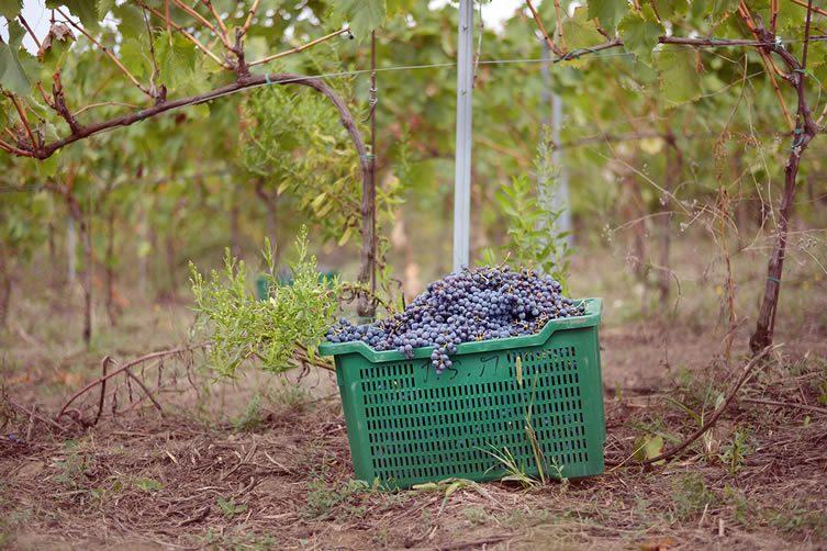 organic agricultural estate